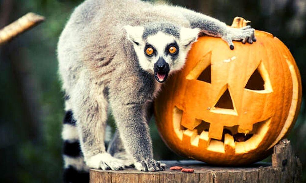 Spooktacular week at ZSL London Zoo