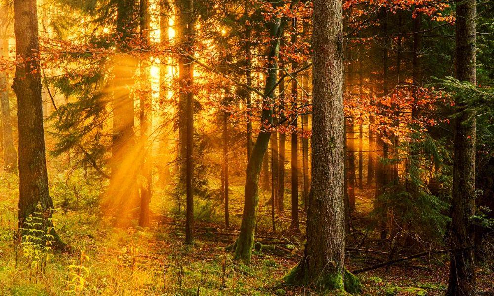 Sunlight streaming through woodlands