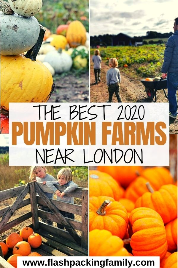 The Best Pumpkin Farms Near London 2020