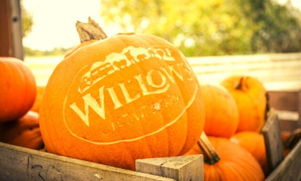 Willows Farm Pumpkin