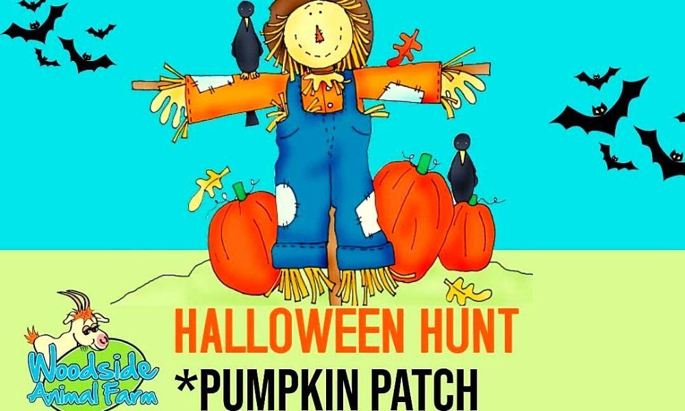 Woodside Animal Farm Pumpkin Patch