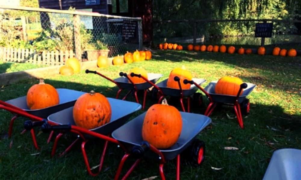 Wroxham Barns pumpkin festival