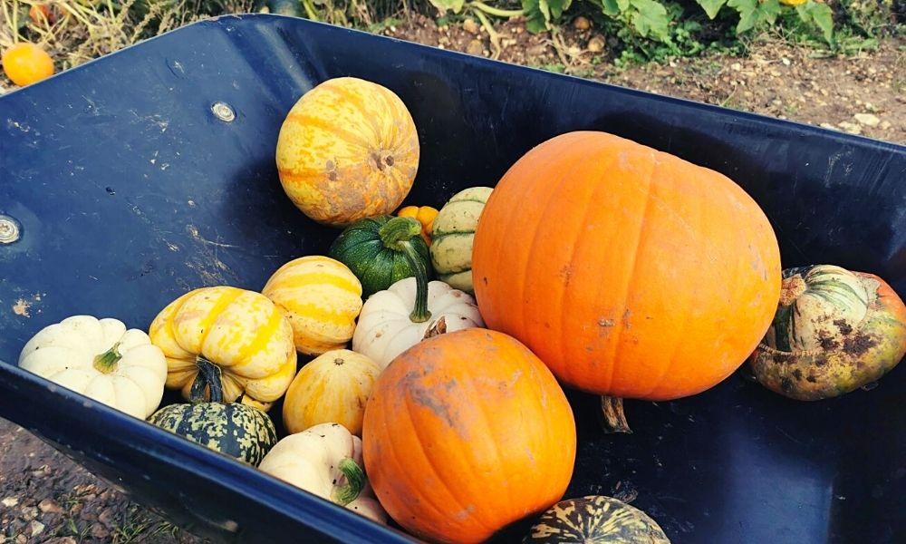 different pumpkin and squash varieties