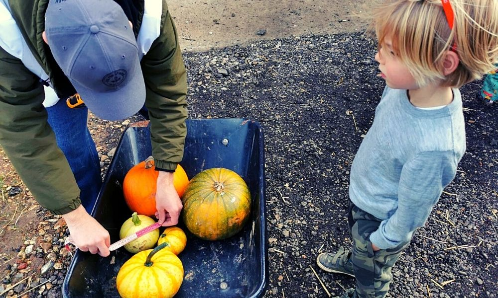 sizing pumpkins