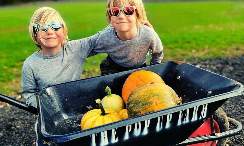 wheelbarrow full of pumpkins at the Pop Up Farm