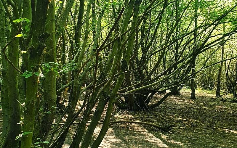 Ancient woodlands at Heartwood Forest