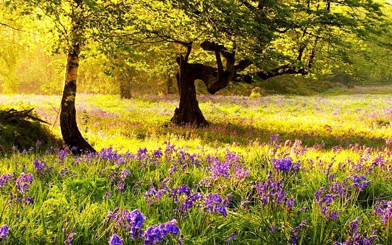 Ashenbank Wood bluebells Photo Credit Georgina Smith Woodland Trust