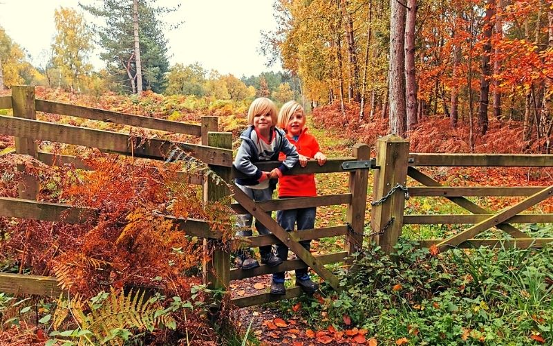 Autumn colours at Broxbourne Woods