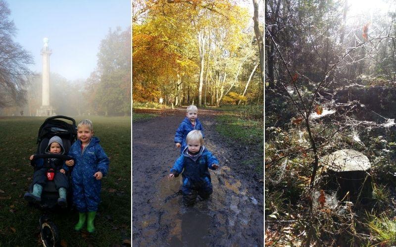 Autumn days at Ashridge Estate
