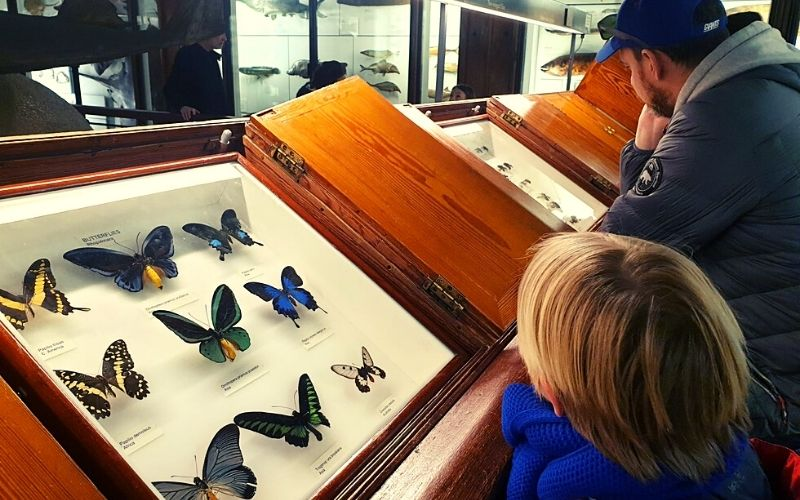 Beautiful butterflies at the Tring Natural History Museum