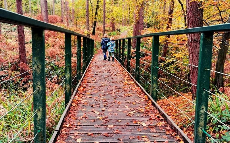 Bridges across streams in Broxbourne Woods