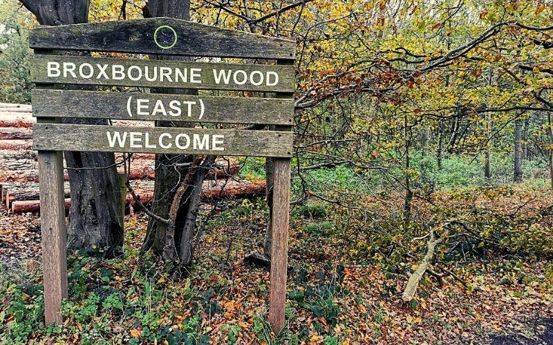 Broxbourne Wood