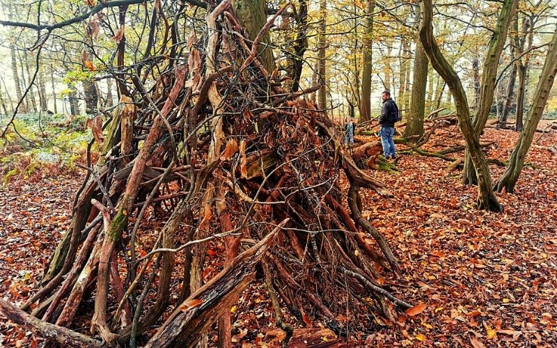 Den building in the woodland areas