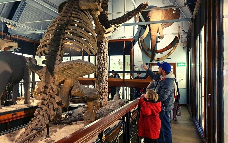 Extinct Giant Sloth at the Tring Natural History Museum