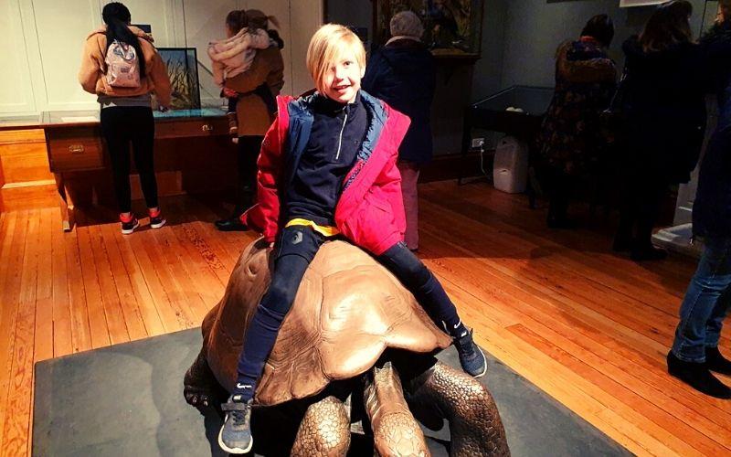 Giant tortoise in the Rothschild Room