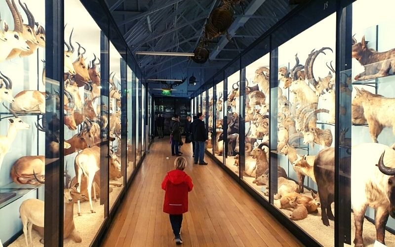 Hoofed animals in Gallery 5 at the Tring Museum