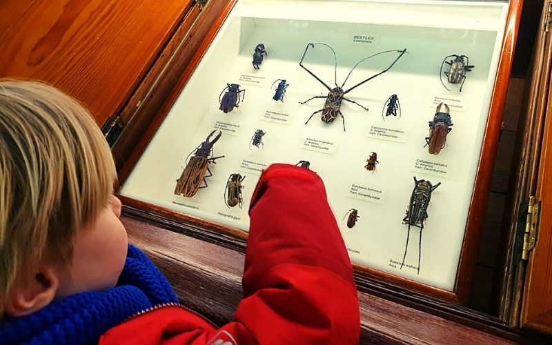 Insects on display at the Tring Natural History Museum