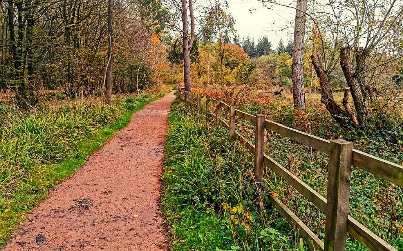 Medium Trail in Broxbourne Woods