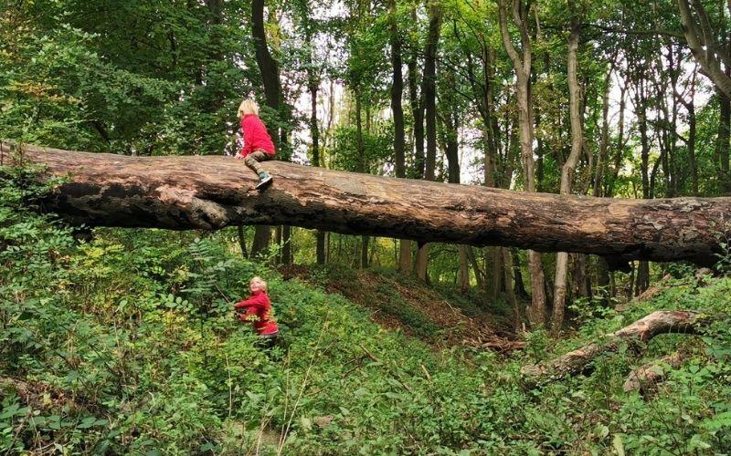 Nature playground at Ashridge Estate