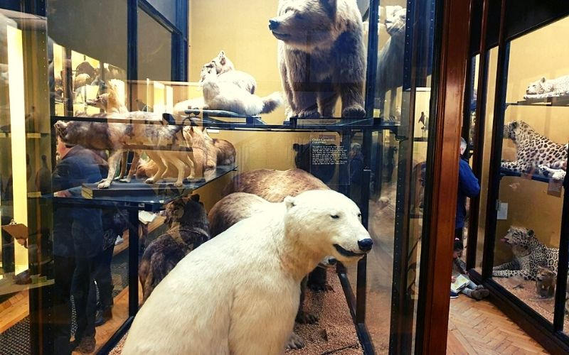 Polar Bear in Gallery 1 at the Tring Museum