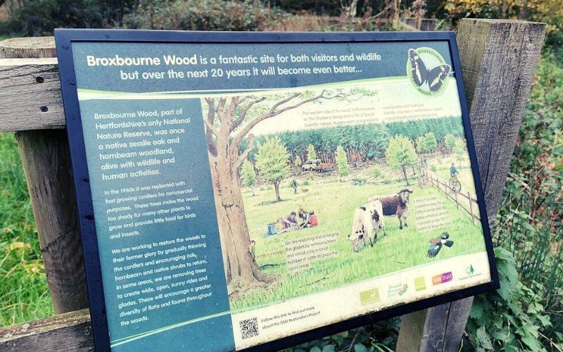 Restoration of Broxbourne Woods