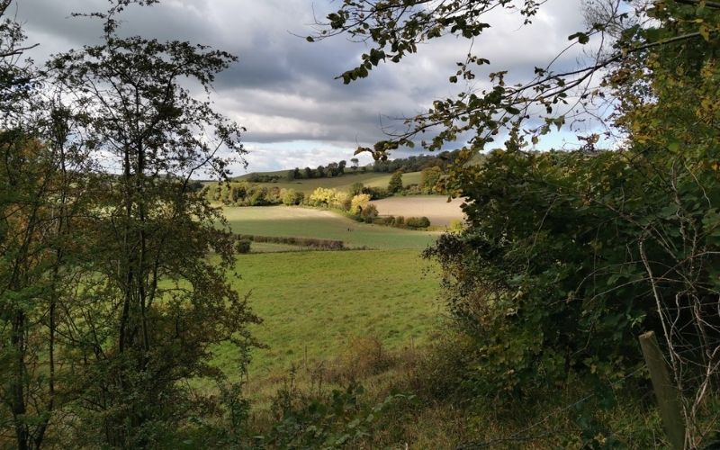 Rolling hills of Ashridge Estate
