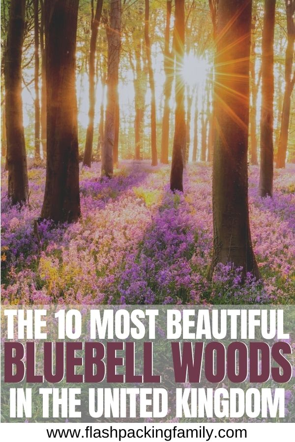 The 10 Most Beautiful Bluebell Woods in the UK