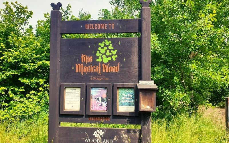 The Magical Wood at Heartwood Forest