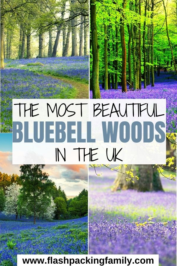 The Most Beautiful Bluebell Woods in the UK