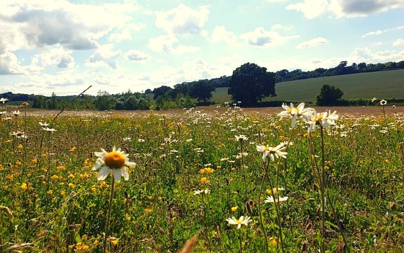 wild flowers in the fields at Heartwood Forest