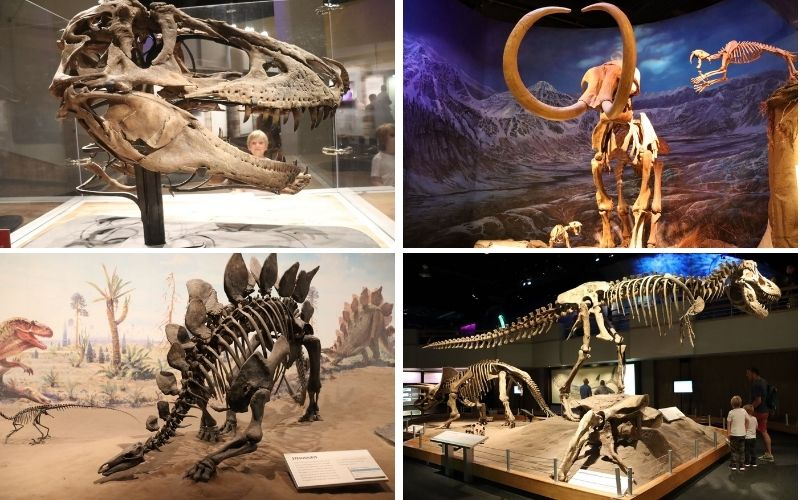 Dinosaur Exhibits at the Royal Tyrrell Museum