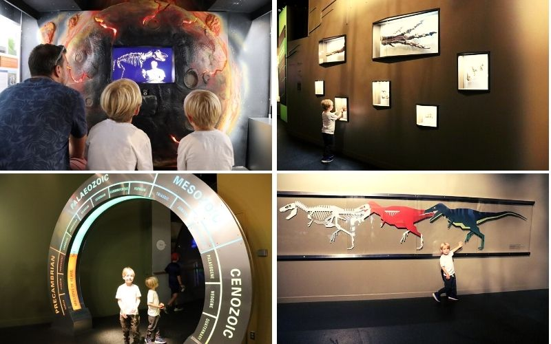 Educational dinosaur displays