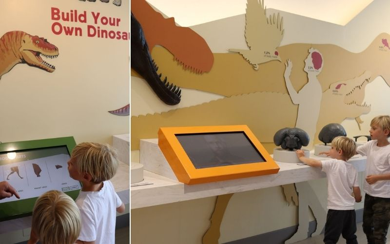 Interactive displays at the Royal Tyrrell Museum