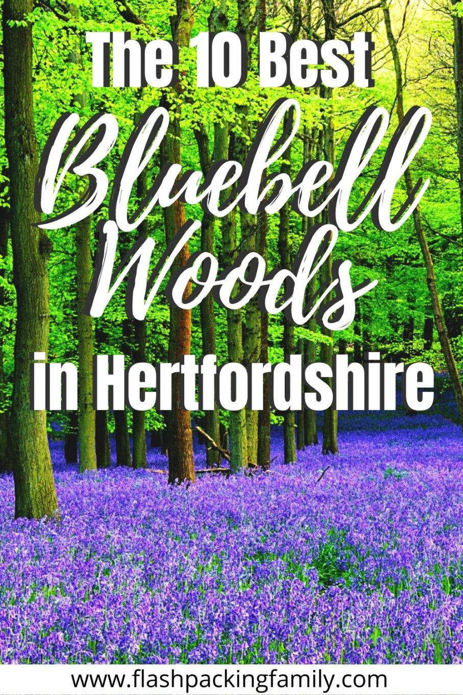 The 10 Best Bluebell Woods in Hertfordshire