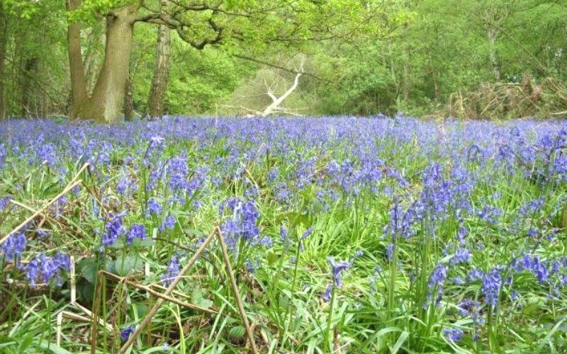 Whippendell Wood Photo Credit Cassiobury Park