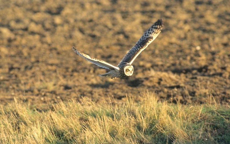Photo Credit Elmley National Nature Reserve