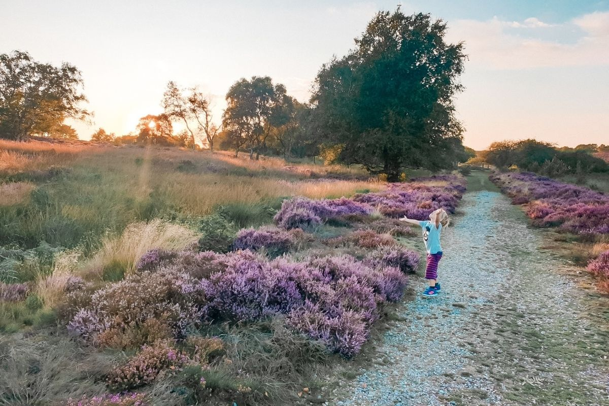 Heathland on the Suffolk Coast