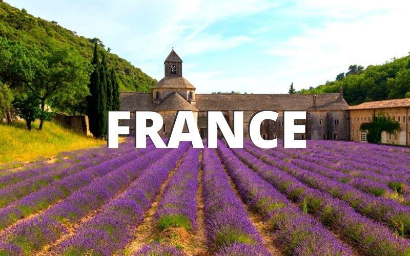 Lavender fields in France.