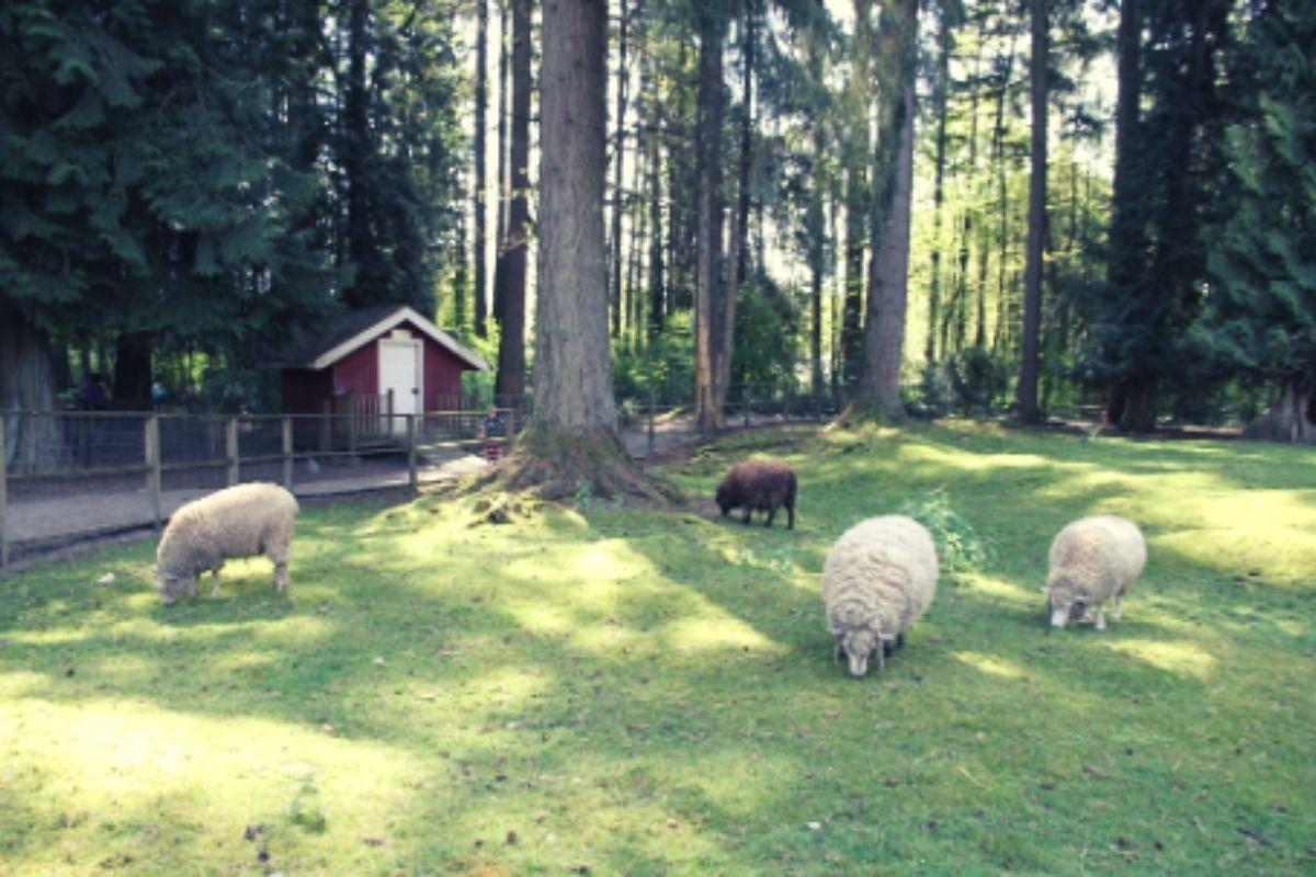 Meet the animals on Maplewood Farm.