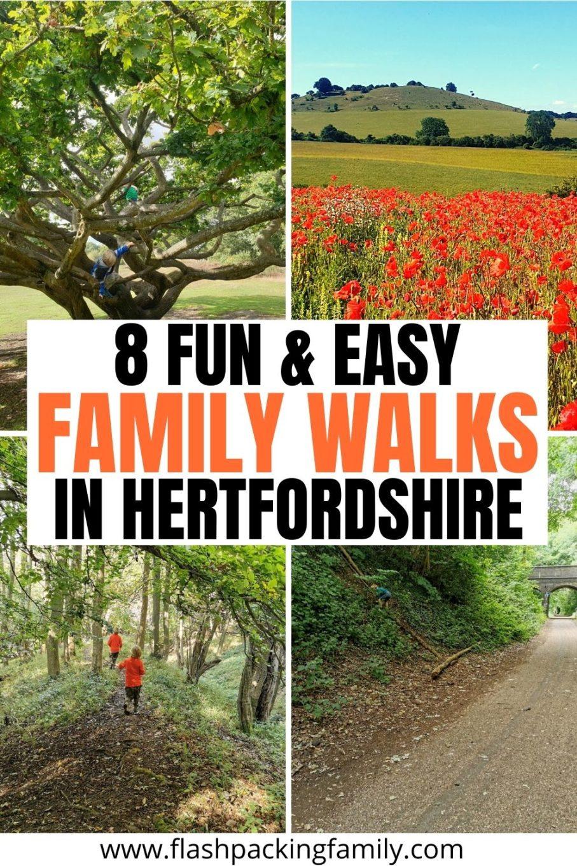 8 Fun & Easy Family Walks in Hertfordshire.