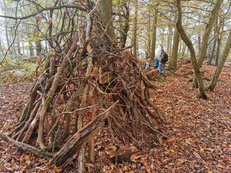 Building dens in the woods.