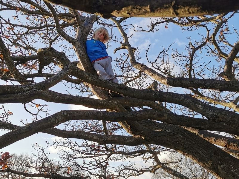 Climbing trees in spring