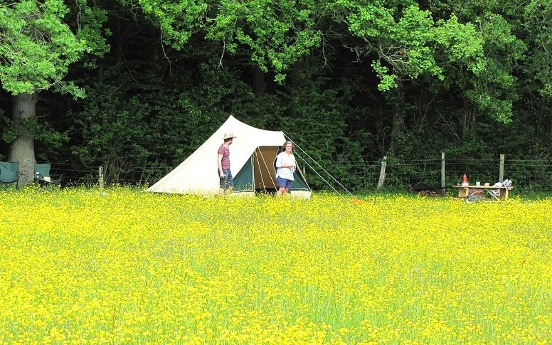 Eco camping in the meadow at Experience Sussex.