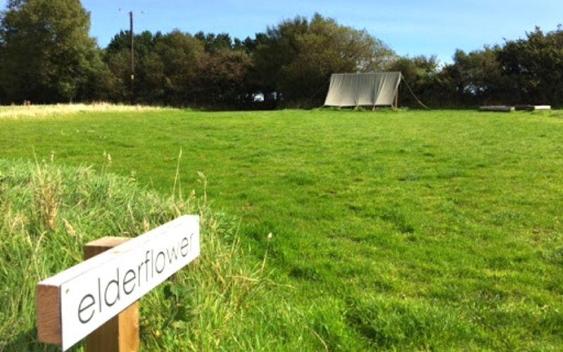 Elderflower pitch at Coastal Meadows campsite.