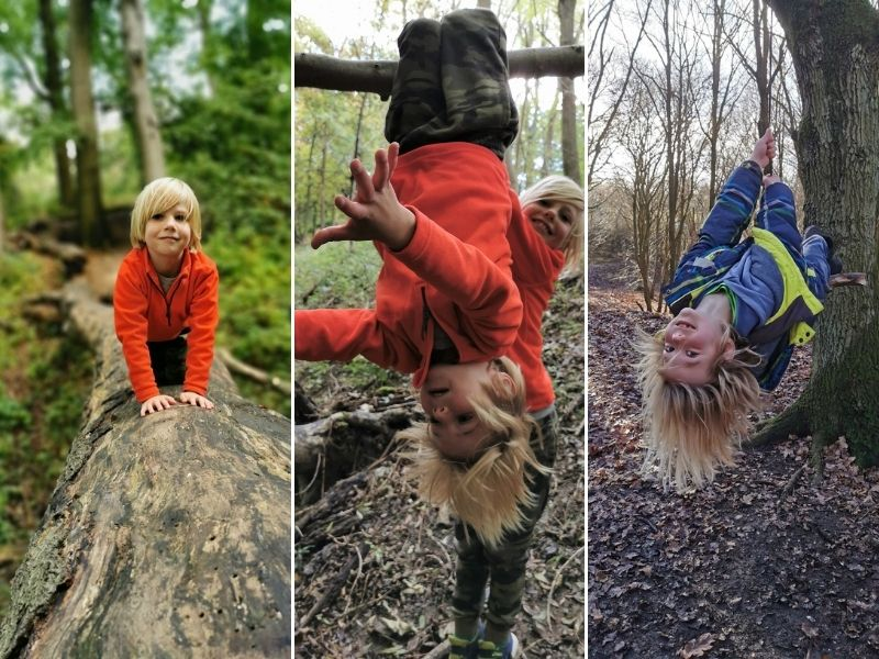 Kids climbing in the trees in nature's playground.