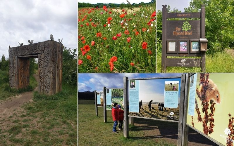 Enjoying Herfordshire walks for families at Heartwood Forest.