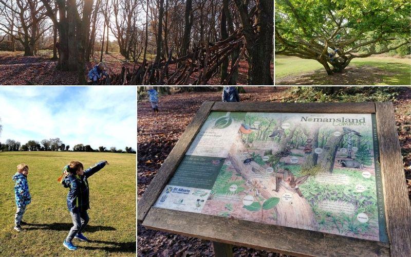 Exploring Nomansland Common in Hertfordshire.