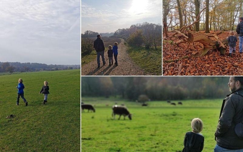 Exploring Panshanger Park in Hertfordshire.