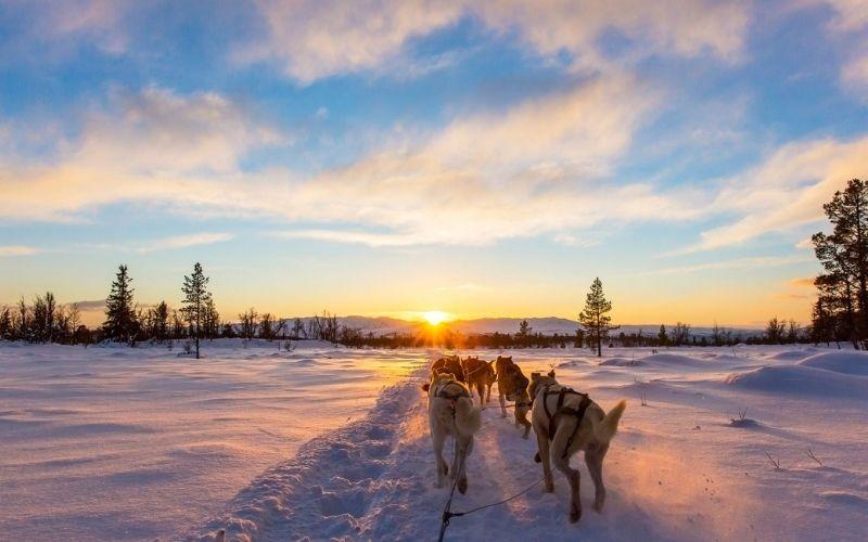 Husky sledding in Lapland in the winter.