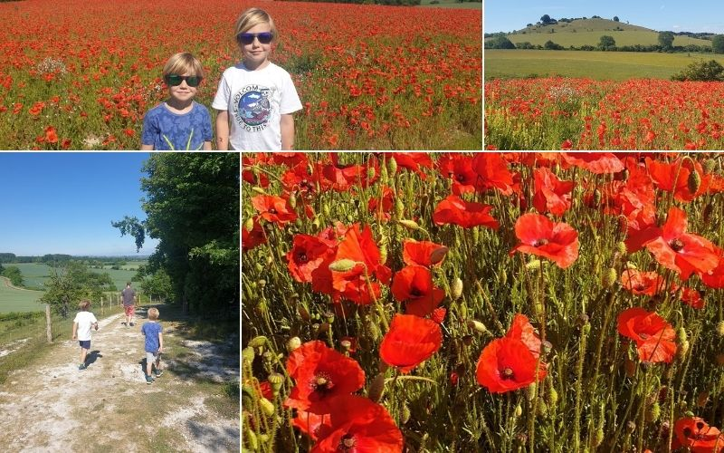 Pegsdon Hills and Hoo Bit Nature Reserve in Hertfordshire in the summer with poppies blooming.